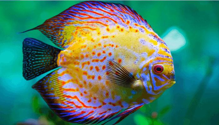 Clasificaciones de los peces de acuerdo a su entorno for Peces agua dulce