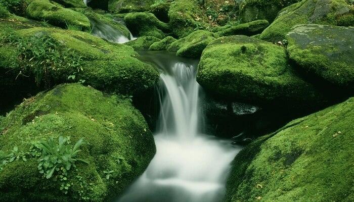 Musgo en cascadas