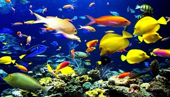 7 peces que te har n querer ir a bucear verdaderamente for Peces marinos para acuarios pequenos