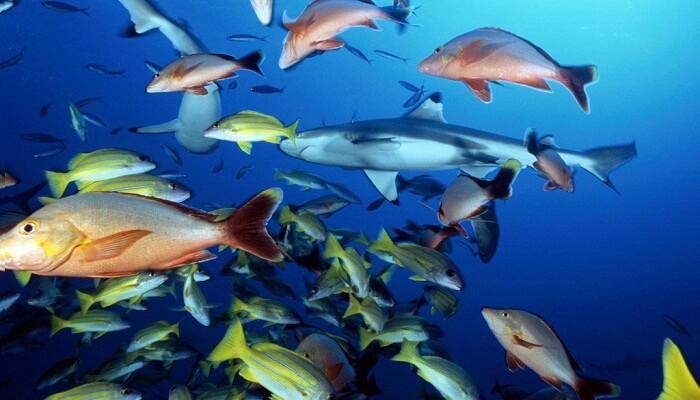 3 variedades diferentes del genero de los peces marinos for Variedad de peces