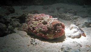 pez piedra españa