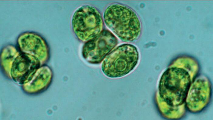Características de las algas