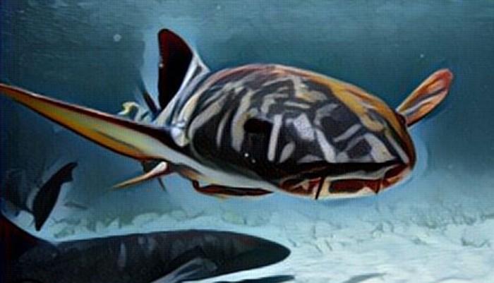 Ambiente y distribución del tiburón gato