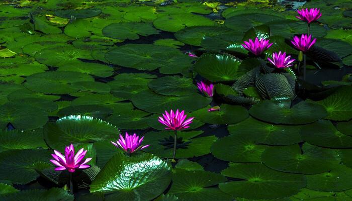 Flores Marinas