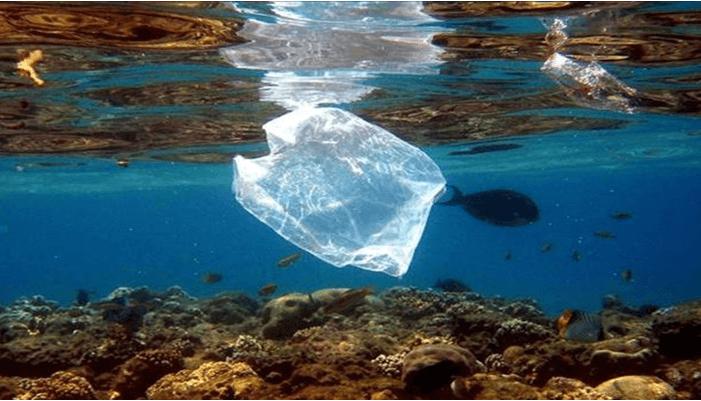 la conservación en nuestros mares y oceanos