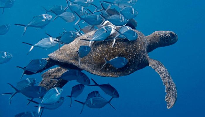 estas tortugas cambian de tamaño