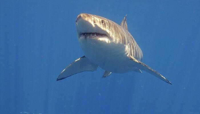 El Animal Más Temido Del Mar
