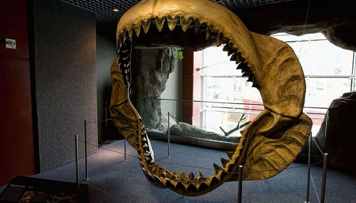 Dentadura del Megalodón