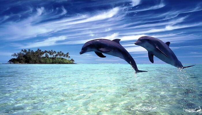 Delfines En Peligro De Extinción