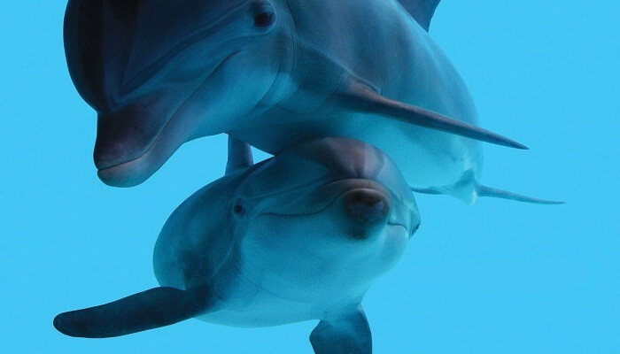 Delfines en cautiverio