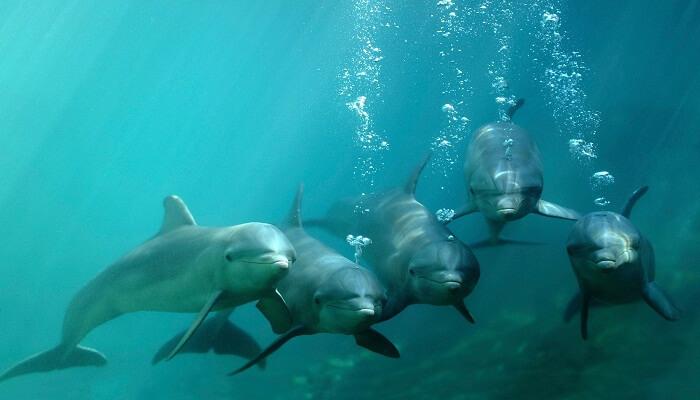 Respiración De Los Delfines
