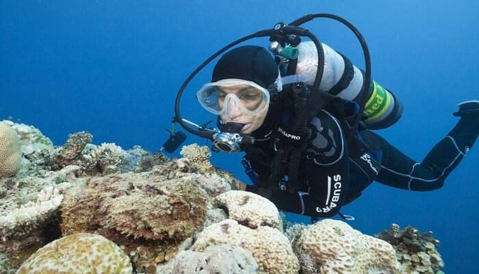 Mimetismo en el pez piedra