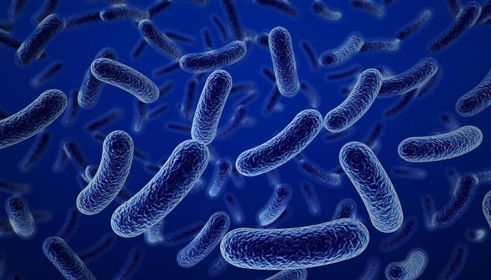 Bacterioplancton