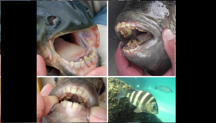 Dientes en un pez