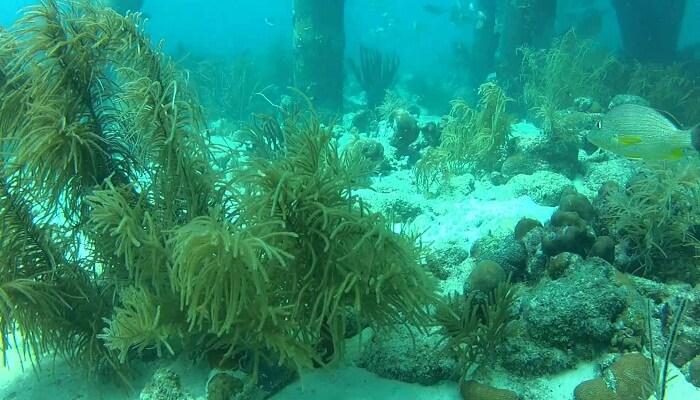 Plantas Del Mar