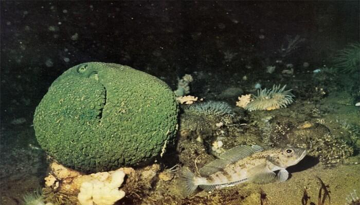 animales marinos que viven en el fondo del mar