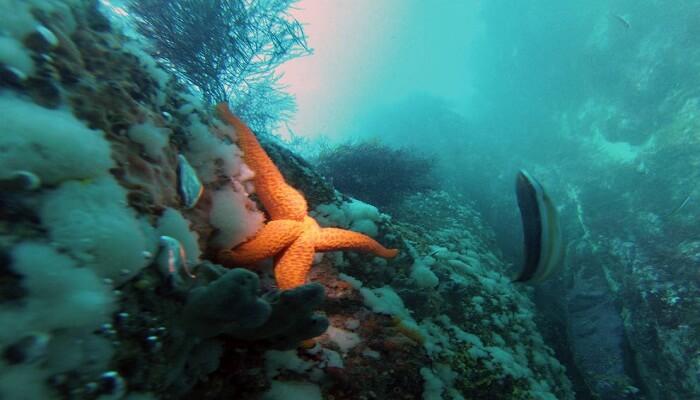 clasificación de especies marinas .