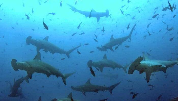 Nadan en manada para buscar comida