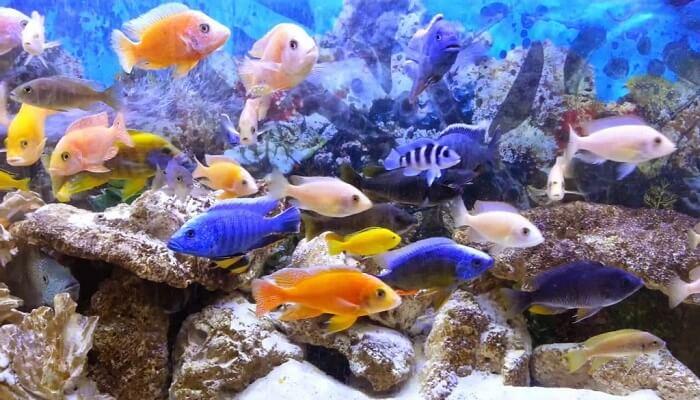 costumbres de los peces
