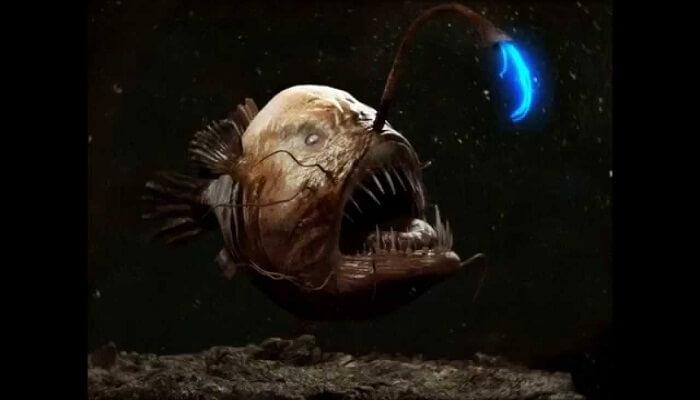 pez antena