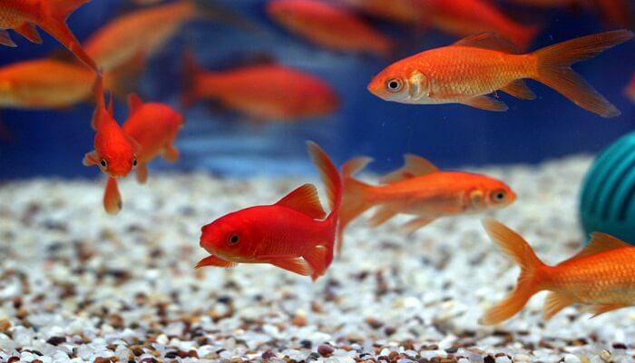 tipos de peces y sus caracteristicas