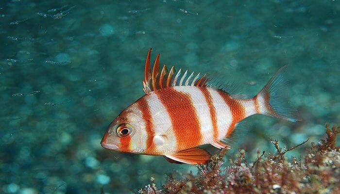 pescados de la bahia de cadiz