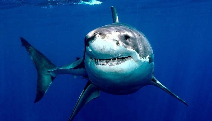 cuánto vive un tiburón