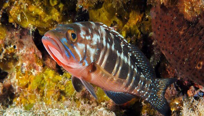 especies de peces en Canarias