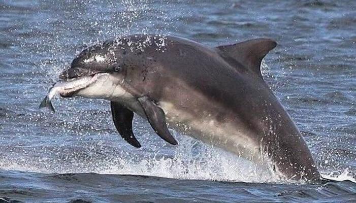 Prácticas en la alimentación de los delfines