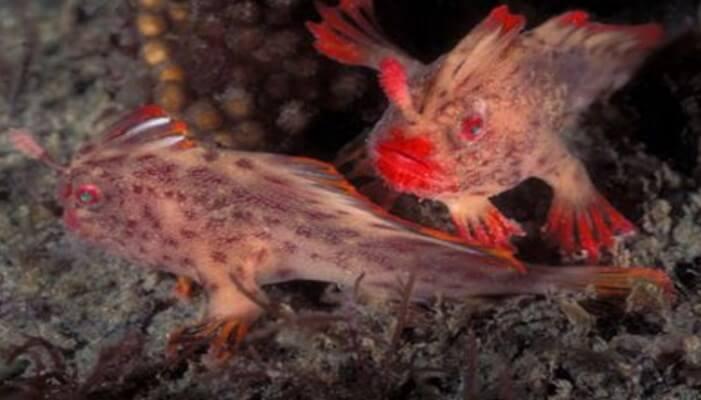 pez rosa con manos