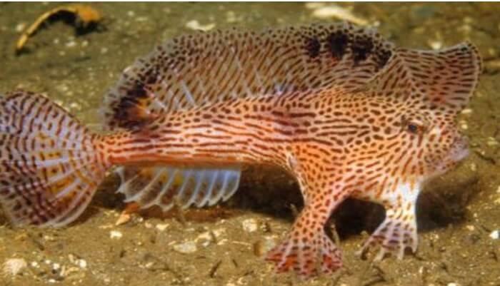 Las aletas del pez rosa con manos