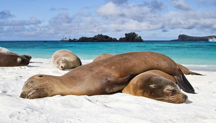 Focas descansando en la playa