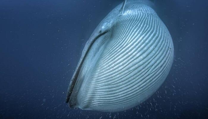 cómo son las ballenas