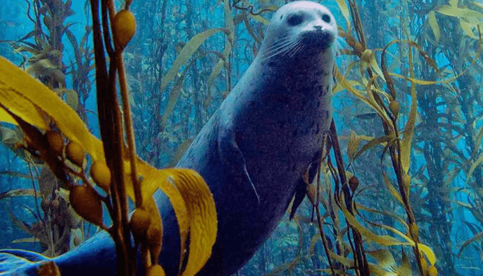 Caracteristicas de las algas pardas