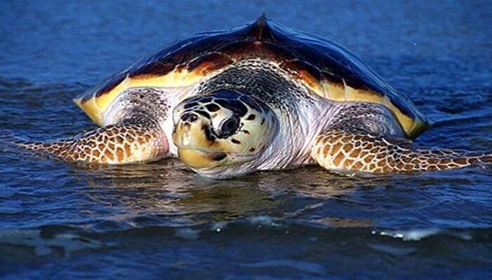 extinción de las tortugas
