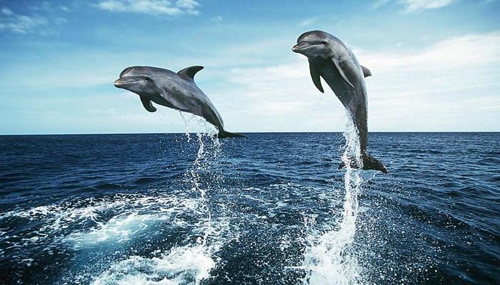 habilidades de los delfines