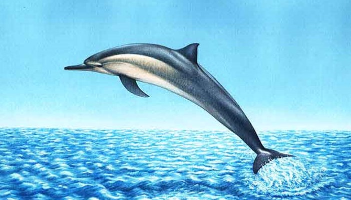 El sistema de silbar de un delfín es muy impresionante