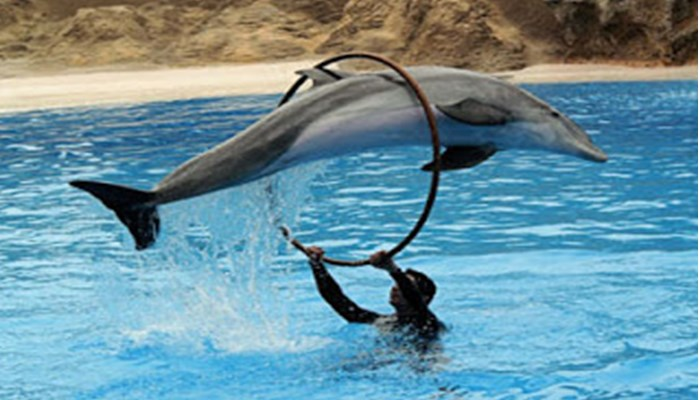 Los delfines pueden sujetar la respiración