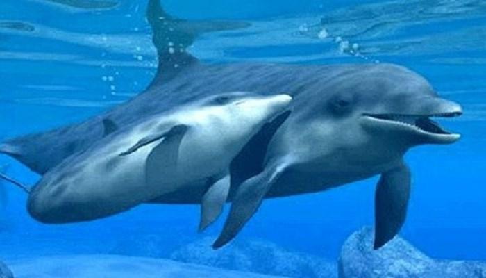 un delfín en aguas hondas