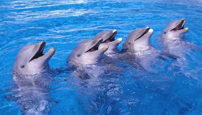 La revelación de la inteligencia de los delfines