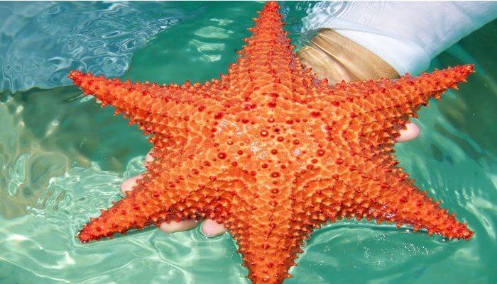 Distribución y medio ambiente de la estrella de mar
