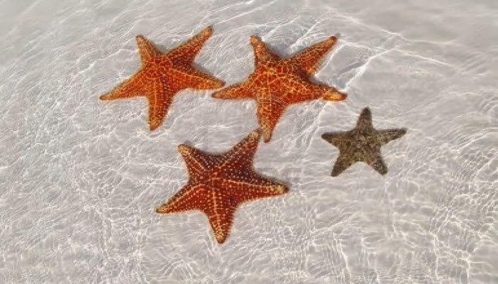 Peligros que padece la estrella de mar