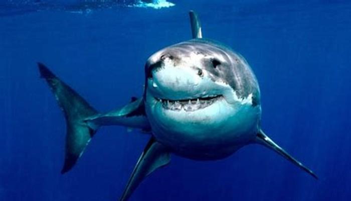tiburones del mar mediterraneo