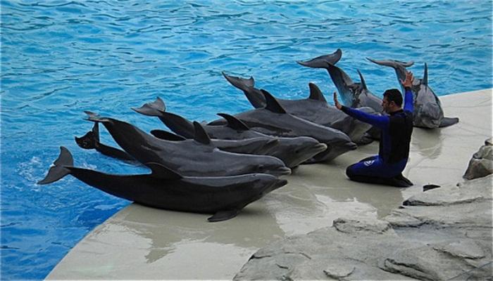 Delfines en cautiverio