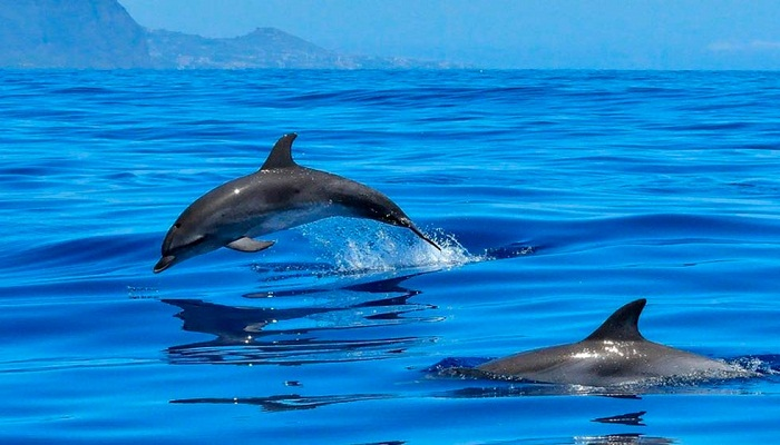 delfines asesinos