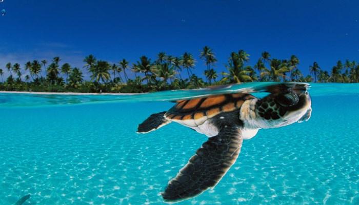 donde vive la tortuga de mar