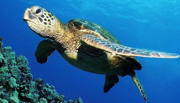 migración anual de las tortugas