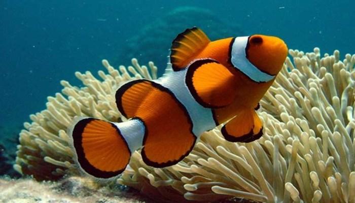 informacion de los animales marinos