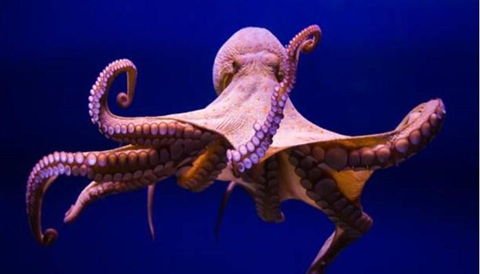 animales marinos que si necesitan un 100% del agua