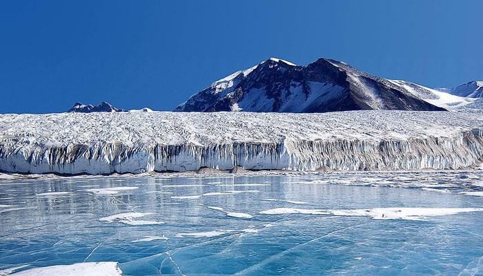 Océano Antártico ¡aguas llenas de vida y sorpresas! 2